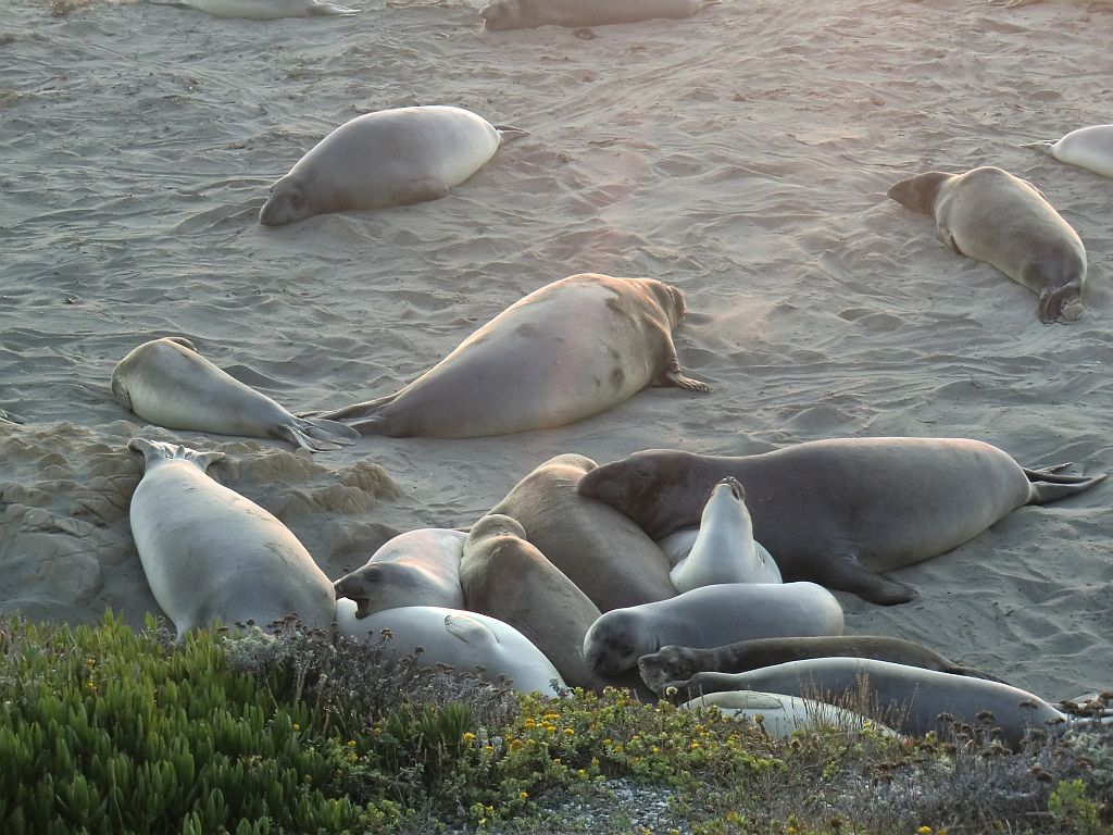 10_bigsur_seals