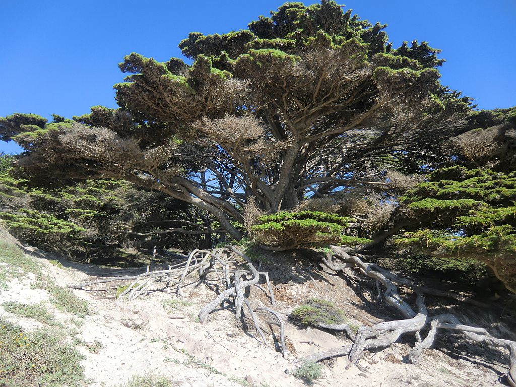 10_bigsur_tree