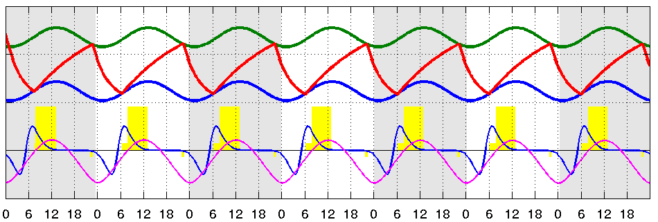 Combined Model for Human Sleep-Wake Rhythm